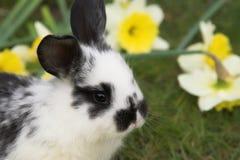 兔宝宝偷看逗人喜爱的复活节非常 免版税库存照片