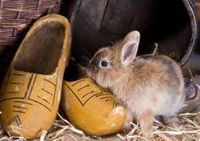 兔宝宝农场 库存照片