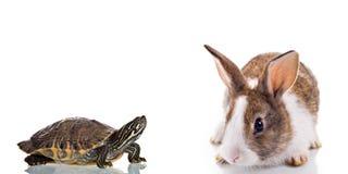 兔宝宝和乌龟 免版税库存图片