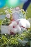兔宝宝和复活节五颜六色的花在草在日落 E 免版税库存图片