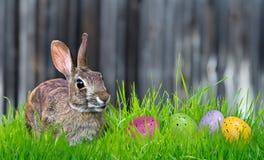 兔宝宝和复活节彩蛋 库存图片
