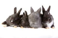 兔宝宝四 免版税库存图片