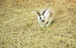 兔宝宝在农场 免版税库存照片