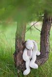 兔宝宝在森林里 免版税库存照片