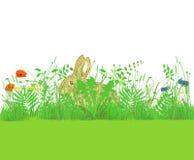 兔宝宝在花草甸  免版税库存图片