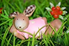 兔宝宝在草在 免版税库存照片