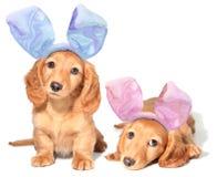兔宝宝复活节小狗 库存图片