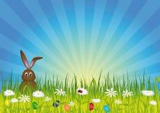 兔宝宝复活节绿色草甸 库存照片