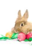 兔宝宝复活节portraite 库存图片