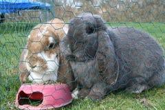 兔宝宝夫人先生 图库摄影