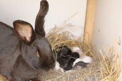 兔宝宝巢 库存图片