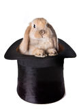 兔宝宝惊奇 免版税库存照片