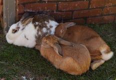 兔宝宝挤作一团在树荫下外面在一个农场在一个热的夏日 库存图片