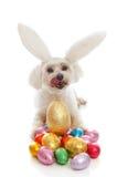 兔宝宝搭扣吊耳复活节彩蛋宠物 图库摄影