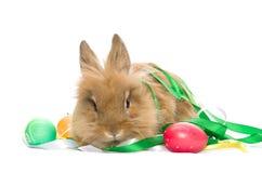 兔宝宝欢乐的复活节彩蛋 库存图片