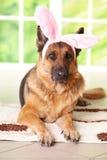 兔宝宝狗复活节 免版税库存照片