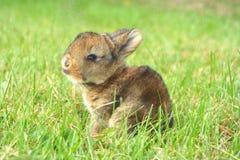 兔宝宝甜点 免版税库存照片