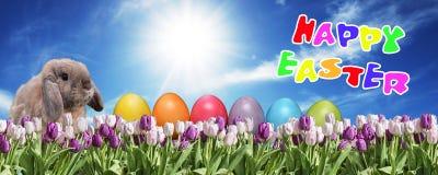 兔宝宝用桃红色的鸡蛋和在草原蓝色晴朗的天空的招呼白色的郁金香愉快的东部文本英语 库存照片