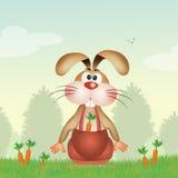 兔宝宝用红萝卜 免版税库存照片