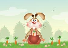 兔宝宝用红萝卜 图库摄影
