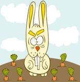 兔宝宝红萝卜域 免版税库存照片
