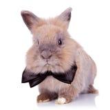 兔宝宝绅士 免版税图库摄影
