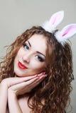 兔宝宝耳朵 库存图片