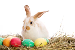 兔宝宝色的复活节彩蛋干草 库存照片