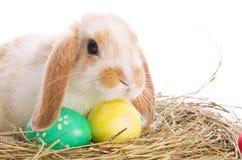 兔宝宝色的复活节彩蛋干草 免版税库存照片