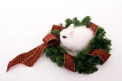 兔宝宝花圈 免版税库存图片