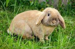 兔宝宝草 免版税库存图片