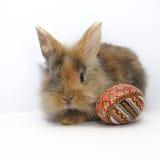 兔宝宝被绘的复活节彩蛋 免版税库存图片