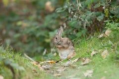 兔宝宝逗人喜爱的复活节 免版税库存照片
