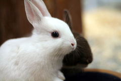 兔宝宝 图库摄影