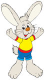 兔宝宝 免版税库存图片