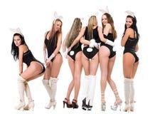 兔宝宝playgirls 库存图片