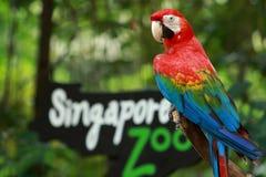 入口新加坡动物园 免版税库存照片