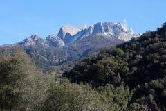 入国家公园美国加州红杉 库存照片