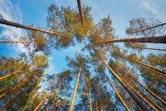 入在日落期间的森林 免版税库存图片