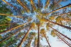 入在日落期间的森林 库存图片
