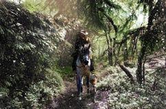 入多雪的森林 免版税库存照片