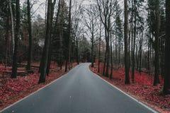 入德国森林 库存图片