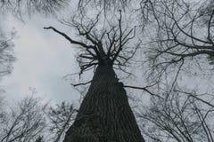 入德国森林 免版税库存照片