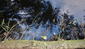 入树,天空蔚蓝,走通过国家公园在英国 免版税库存图片