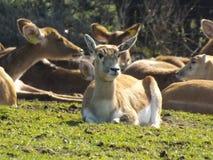 全世界动物 免版税库存照片