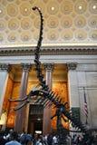 全国历史的著名美国博物馆 免版税库存图片