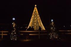 全国圣诞树 免版税库存照片