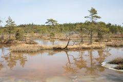 全国沼泽公园在拉脱维亚, Kanieris 库存图片