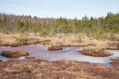 全国沼泽公园在拉脱维亚, Kanieris 免版税库存照片