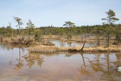 全国沼泽公园在拉脱维亚, Kanieris 免版税库存图片